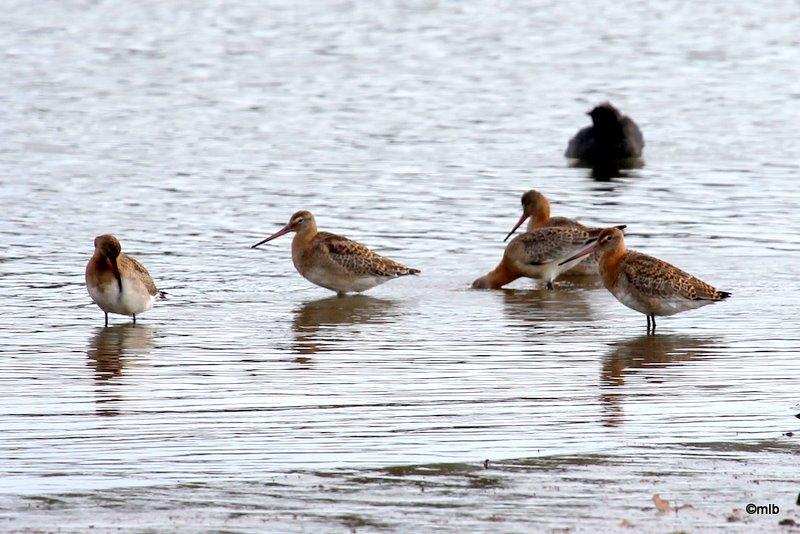 étang de Toul-Dour, Plonéour-Lanvern, 18/9/2011
